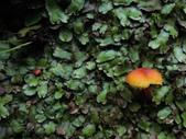 亮紅濕傘:中正山亮紅濕傘.20160522-9.JPG