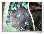 2009陽明山二子坪(20090411):IMG_6040_nEO_IMG.jpg