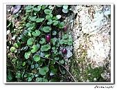 士林-天溪園生態中心(20090606):3IMG_8612.jpg