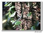 士林-天溪園生態中心(20090606):3IMG_8615.jpg