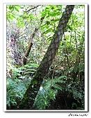 士林-天溪園生態中心(20090606):3IMG_8616.jpg