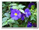 龍崗自然登山步道(20090627):IMG_9552.jpg