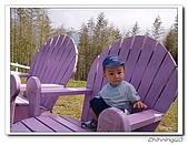 綠光森林200511:PB110063.jpg