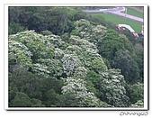 劍潭古道200504:IMG_4419.jpg