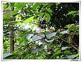 土城桐花公園:IMG_0996.JPG