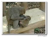 高雄壽山動物園200204:04140049.jpg