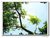 龍崗自然登山步道(20090627):IMG_9566.jpg