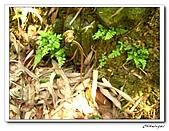 士林內湖-大崙頭山(20090607):IMG_8755.jpg