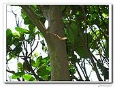 龍崗自然登山步道(20090627):IMG_9568.jpg
