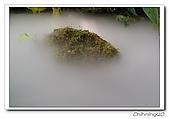 綠世界200610:100_4826.jpg