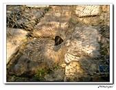 士林內湖-大崙頭山(20090607):IMG_8757.jpg