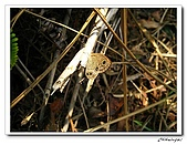 士林內湖-大崙頭山(20090607):IMG_8760.jpg