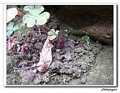 芝山岩自然公園(20090321):IMG_5756_nEO_IMG.jpg