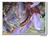 芝山岩自然公園(20090321):IMG_5761_nEO_IMG.jpg