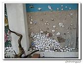 馬蹄蛤200706:IMG_2251.jpg