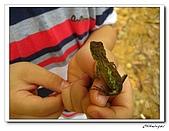 士林內湖-大崙頭山(20090607):IMG_8774.jpg