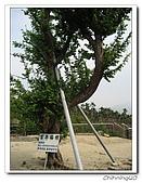 梅山公園200702:IMG_0237.jpg
