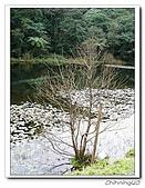 福山植物園200301:P1180335.jpg