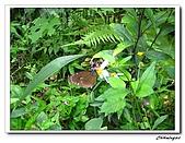 芝山岩自然公園(20090321):IMG_5779_nEO_IMG.jpg