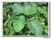 芝山岩自然公園(20090321):IMG_5781_nEO_IMG.jpg