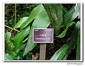 福山植物園200301:P1180348.jpg