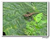 芝山岩自然公園(20090321):IMG_5782_nEO_IMG.jpg