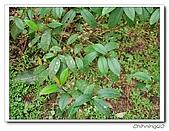 福山植物園200301:P1180351.jpg