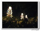 松田崗創意生活農莊200706:IMG_2336.jpg