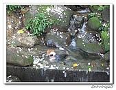 大艽芎古道賞桐花200704:IMG_0130.jpg