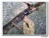 芝山岩自然公園(20090321):IMG_5795_nEO_IMG.jpg