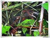 自然生態攝影(20110714Updated):IMG_3027.JPG