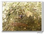 士林內湖-大崙頭山(20090607):IMG_8790.jpg