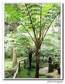 福山植物園200301:P1180356.jpg