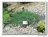 福山植物園200301:P1180357.jpg