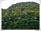 土城承天禪寺爬山:IMG_0764.JPG