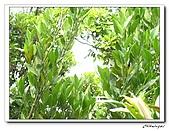 士林內湖-大崙頭山(20090607):IMG_8794.jpg
