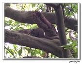 芝山岩自然公園(20090321):IMG_5800_nEO_IMG.jpg