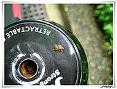 自然生態攝影(20110714Updated):IMG_0680.JPG