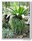 福山植物園200301:P1180364.jpg