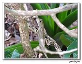 芝山岩自然公園(20090321):IMG_5804_nEO_IMG.jpg