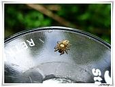 自然生態攝影(20110714Updated):IMG_0683.JPG