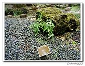 福山植物園200301:P1180367.jpg