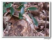 芝山岩自然公園(20090321):IMG_5806_nEO_IMG.jpg