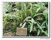 福山植物園200301:P1180368.jpg