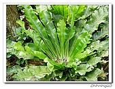 福山植物園200301:P1180369.jpg