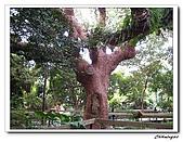 芝山岩自然公園(20090321):IMG_5808_nEO_IMG.jpg