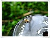 自然生態攝影(20110714Updated):IMG_0692.JPG