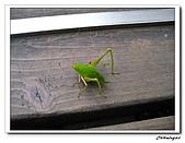 芝山岩自然公園(20090321):IMG_5814_nEO_IMG.jpg