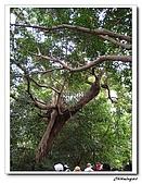 芝山岩自然公園(20090321):IMG_5815_nEO_IMG.jpg