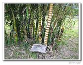 知卡宣森林公園:IMG_1778.jpg